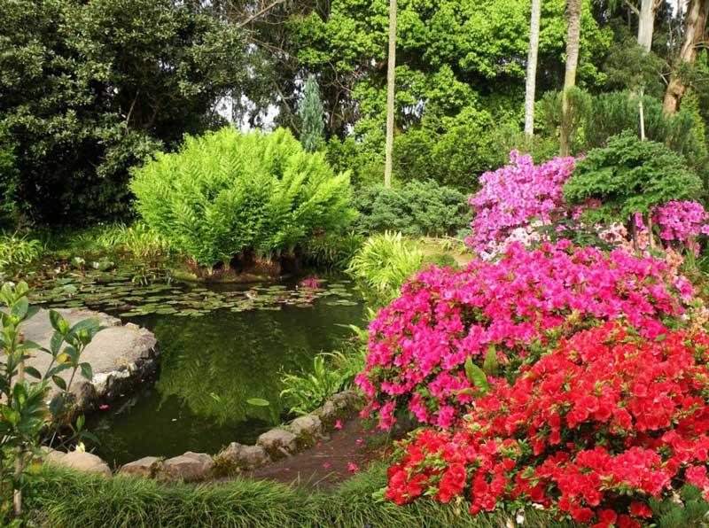 باغ گیاه شناسی باتومی (Botanical Garden)